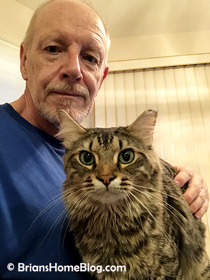 tabby tuesday simon 04242018 - Brian's Home, adopt cats, we deserve it!
