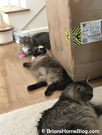 seal - Brian's Home, adopt cats, we deserve it!