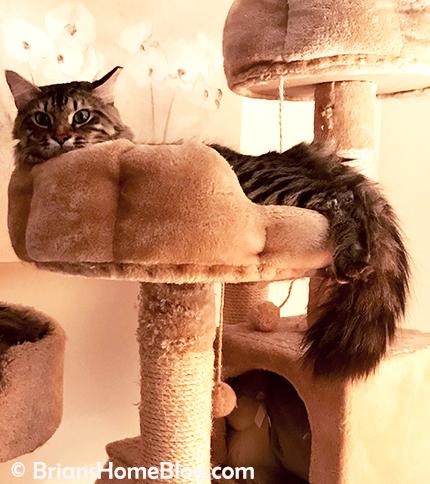 tgif simon 04132018 - Brian's Home, adopt cats, we deserve it!