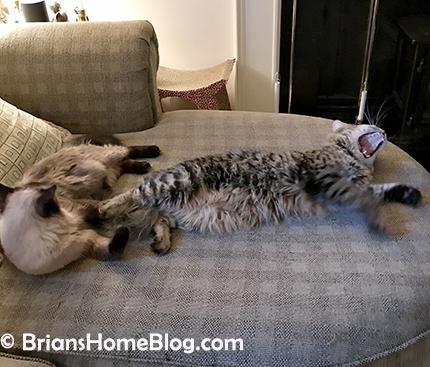tgif simon seal 04272018 - Brian's Home, adopt cats, we deserve it!