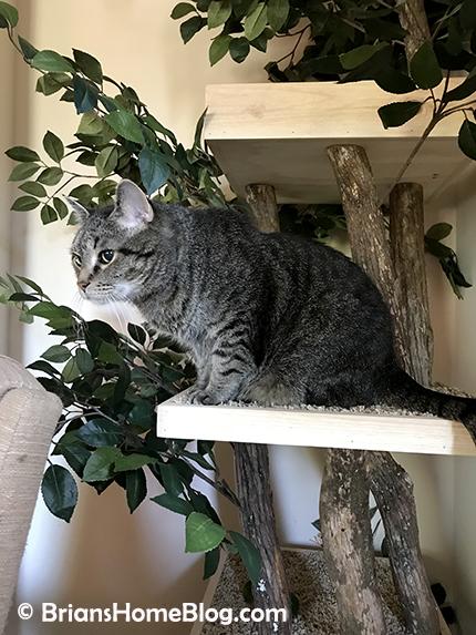 thankful thursday blog hop brian 01 04262018 - Brian's Home, adopt cats, we deserve it!