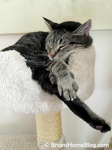 thankful thursday blog hop brian 04122018 - Brian's Home, adopt cats, we deserve it!