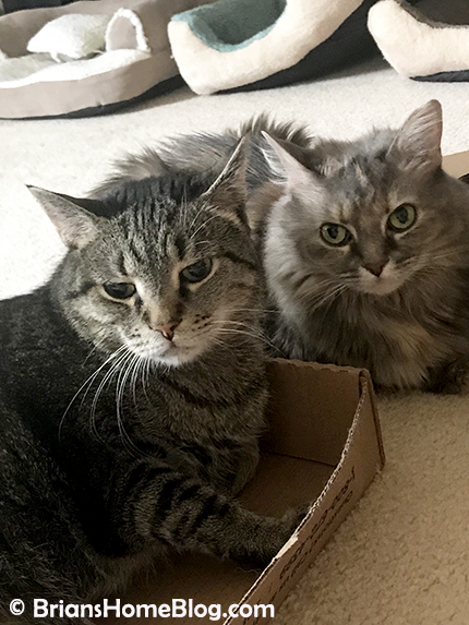 thankful thursday blog hop brian dolly 04192018 - Brian's Home, adopt cats, we deserve it!