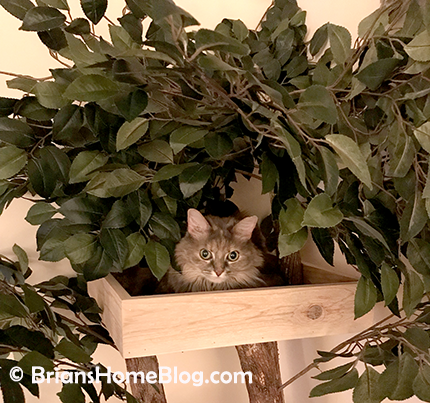 thankful thursday blog hop dolly 05 04262018 - Brian's Home, adopt cats, we deserve it!