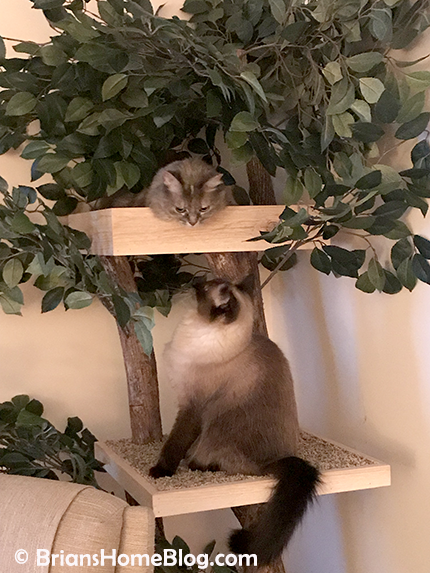 thankful thursday blog hop dolly seal 07 04262018 - Brian's Home, adopt cats, we deserve it!
