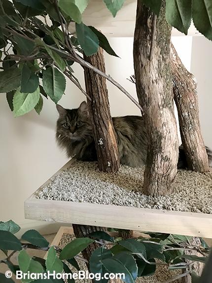 thankful thursday blog hop zoe 04 04262018 - Brian's Home, adopt cats, we deserve it!