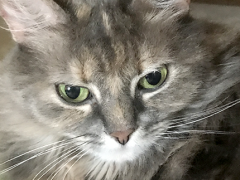 womancat wednesday whisker humps dolly 04252018 - Brian's Home, adopt cats, we deserve it!
