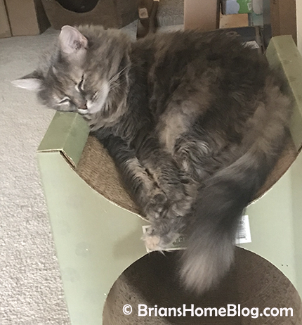 womancat wednesday wordless dolly 04182018 - Brian's Home, adopt cats, we deserve it!