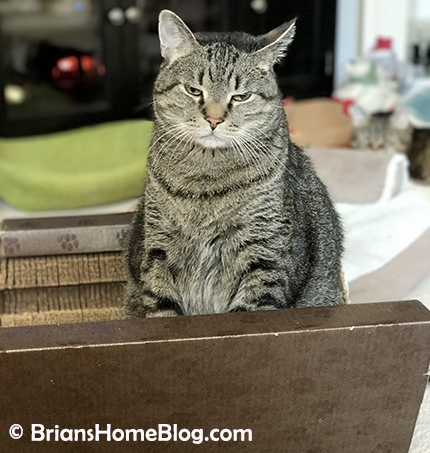 mancat monday brian 05072018 - Brian's Home, adopt cats, we deserve it!