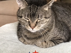 mancat monday brian memorial day 2018 - Brian's Home, adopt cats, we deserve it!
