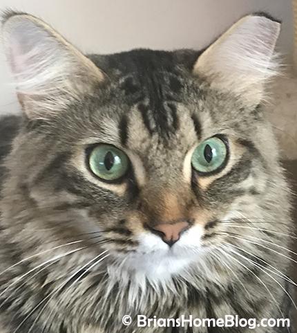 selfie simon 05202018 - Brian's Home, adopt cats, we deserve it!