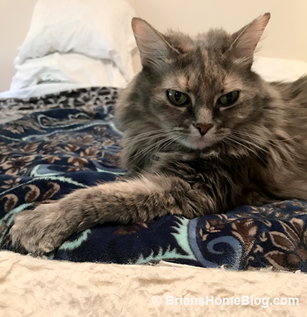 sister saturday dolly 06022018 - Brian's Home, adopt cats, we deserve it!