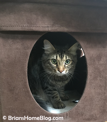 tabby tuesday simon 05152018 - Brian's Home, adopt cats, we deserve it!