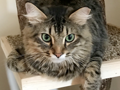 tabby tuesday simon 05292018 - Brian's Home, adopt cats, we deserve it!
