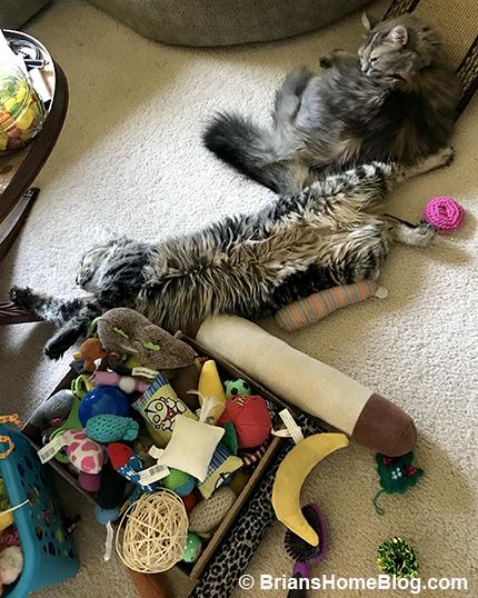 tgif simon dolly 05252018 - Brian's Home, adopt cats, we deserve it!