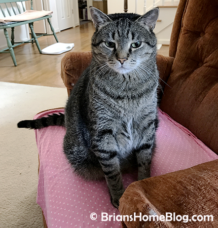 thankful thursday blog hop brian 05102018 - Brian's Home, adopt cats, we deserve it!