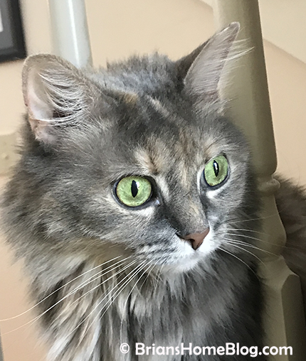 womancat wednesday whisker humps dolly 05162018 - Brian's Home, adopt cats, we deserve it!