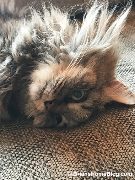womancat wednesday whisker humps zoe 05232018 - Brian's Home, adopt cats, we deserve it!