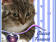 Gracie, FOREVER