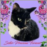 SISTER PRECIOUS Forever [L]
