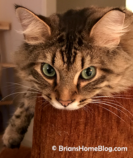 tabby tuesday simon 09042018
