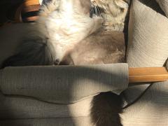 feline friday simon seal 10262018