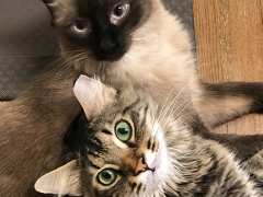 simon and seal 2nd gotcha day 2018