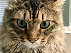 tabby tuesday simon 10232018