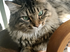 tabby tuesday simon 10302018