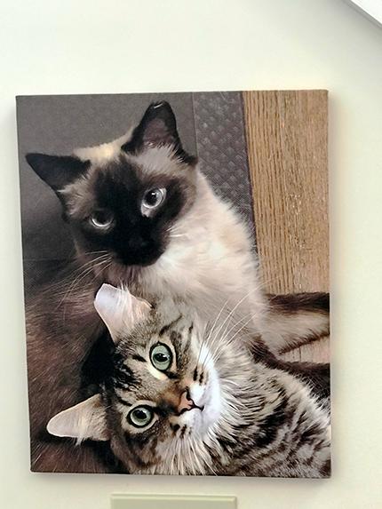 canvas print closeup