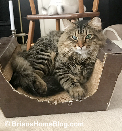 tabby tuesday simon 11202018