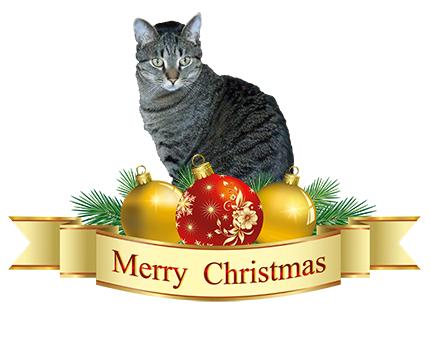 2018 merry christmas brian 12252018