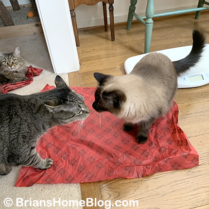 feline friday brian seal zoe 01042019