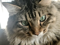 tabby tuesday simon 12042018