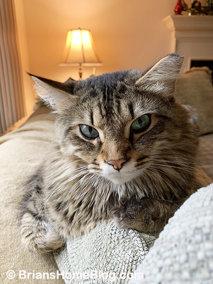 tabby tuesday simon 01222019