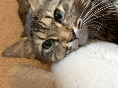 tabby tuesday simon 02262019