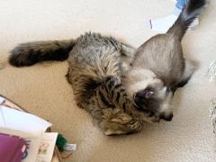 feline friday simon seal 03292019