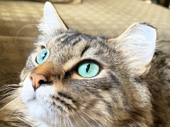 tabby tuesday simon 03052019