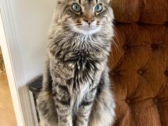 tabby tuesday simon 04022019