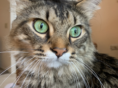 tabby tuesday simon 01 04302019