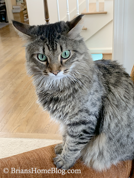 tabby tuesday simon 04162019
