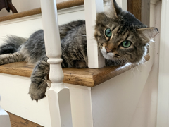tabby tuesday simon 05072019