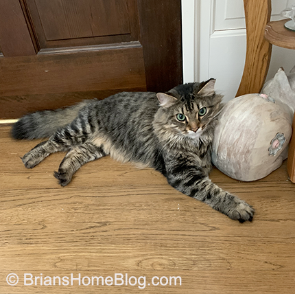 tabby tuesday simon 05142019