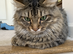 tabby tuesday simon 05212019