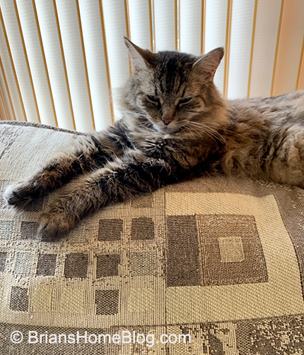 wordless wednesday zoe 05222019