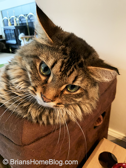 tabby tuesday simon 06042019