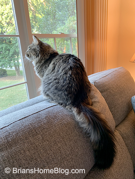 tabby tuesday simon 06112019