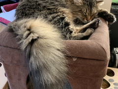 tabby tuesday simon 06252019