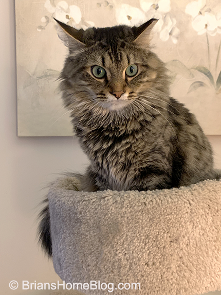 tabby tuesday simon 07162019