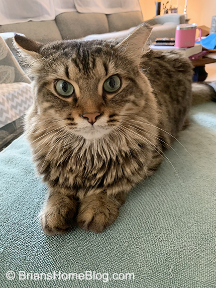 tabby tuesday simon 07302019